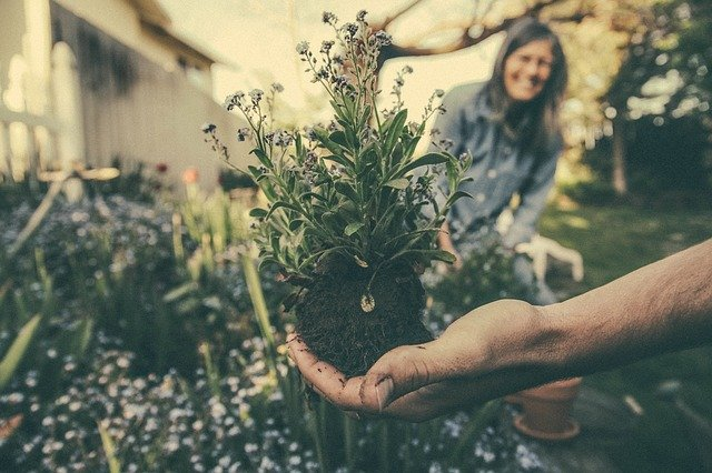 pain free gardening tips