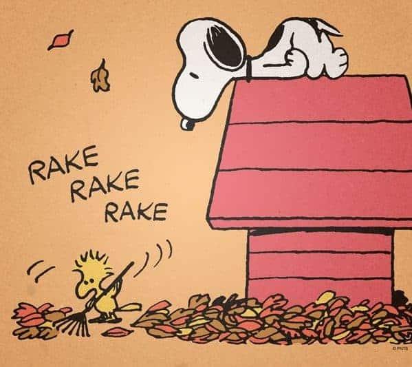 tips to rake leaves pain free
